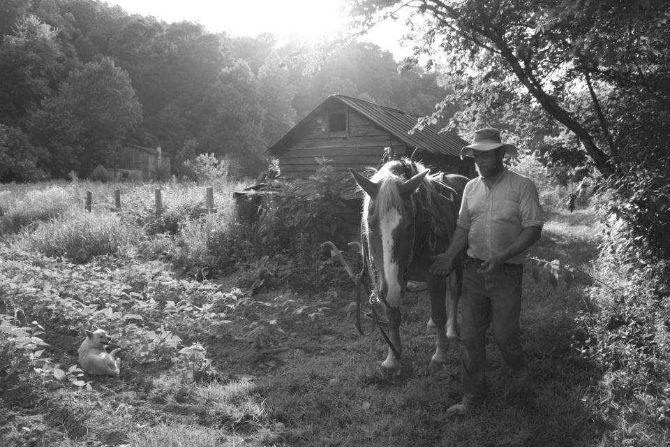Paul Edwards, a farmer, and his Belgian plowhorse (Lindon, TN)