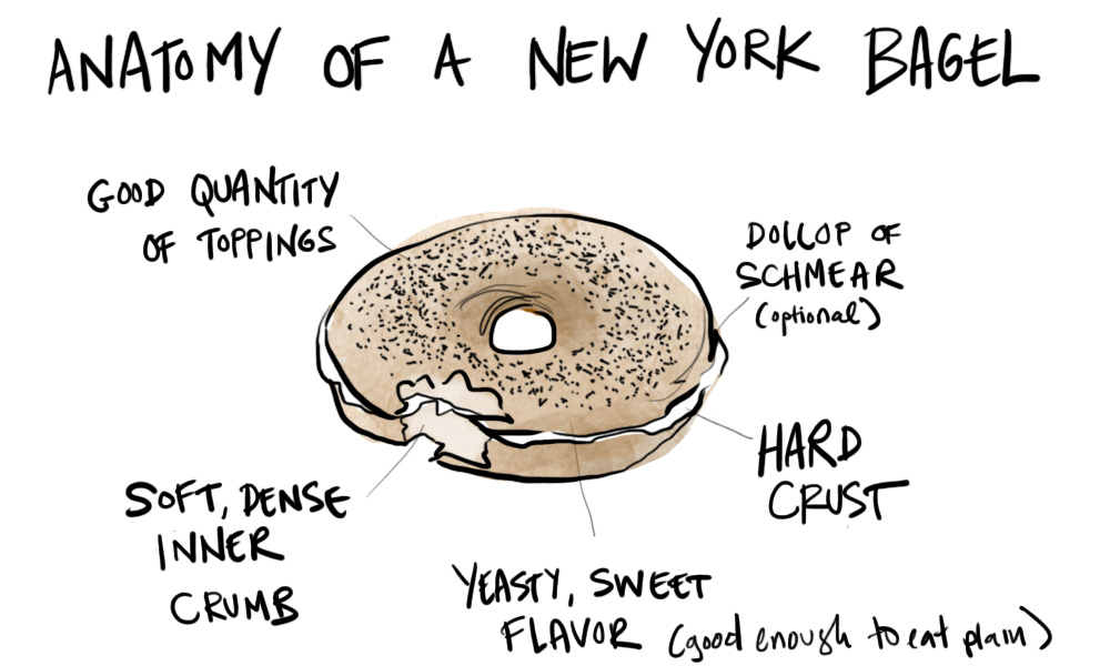 anatomy of bagel