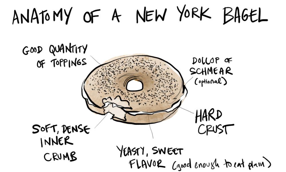 anatomy of bagel